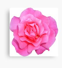 PINK02MEDIUM_00210_SQ5K Canvas Print