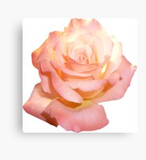 PINK01LIGHT_00315_SQ5K Canvas Print