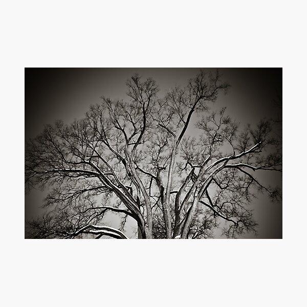 Hanover Tree Photographic Print