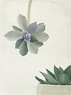 Succulents in shades of green and lilac by Sybille Sterk