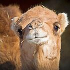 Camel Looking Right At Me by TJ Baccari Photography