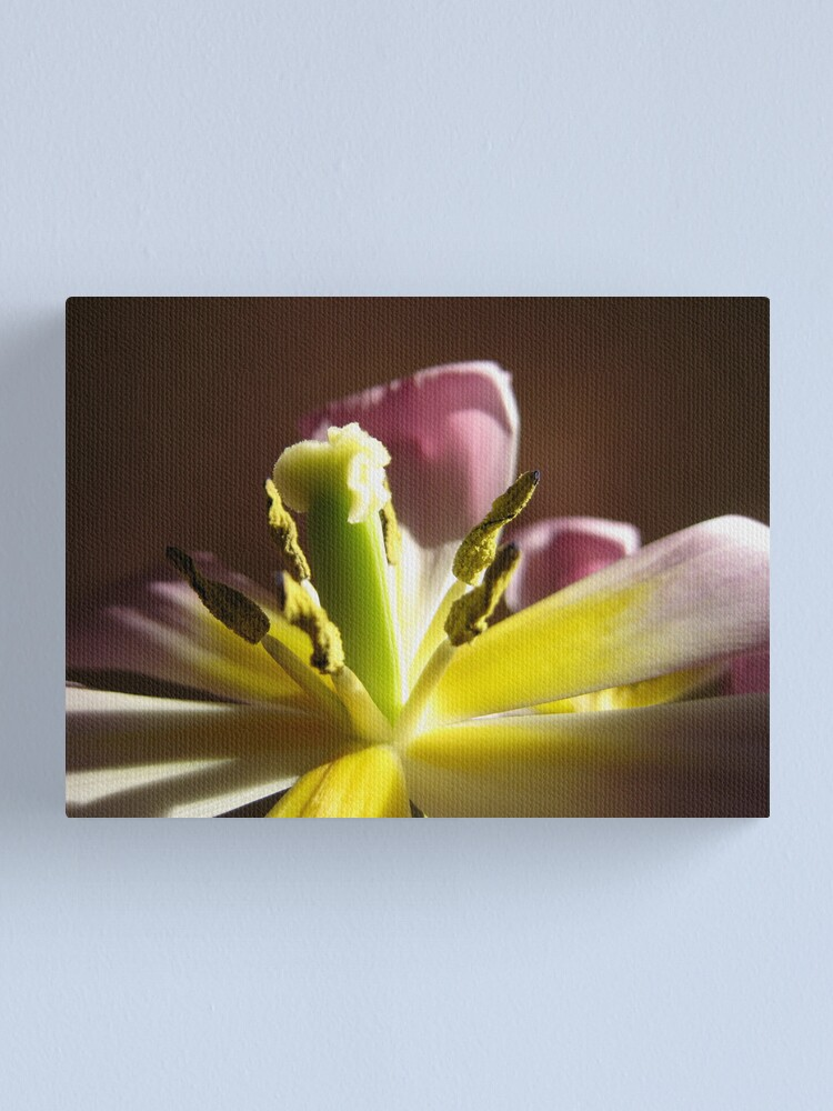 Alternate view of Tulip's Last Hurrah, I Canvas Print
