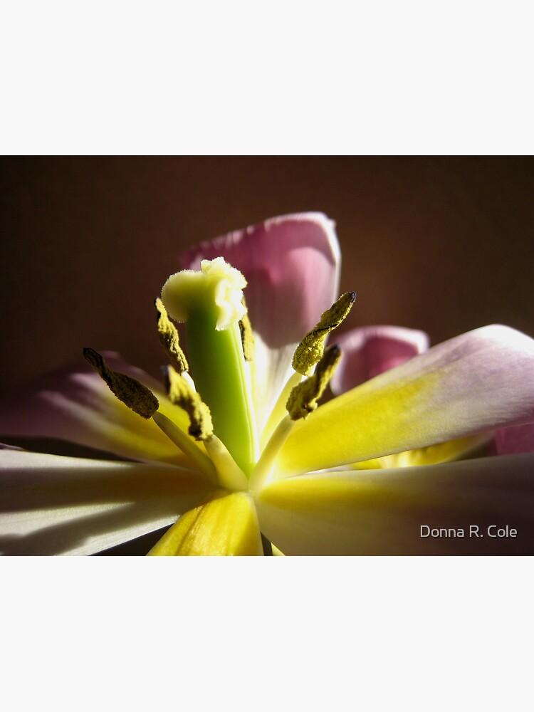 Tulip's Last Hurrah, I by alwaysdrc