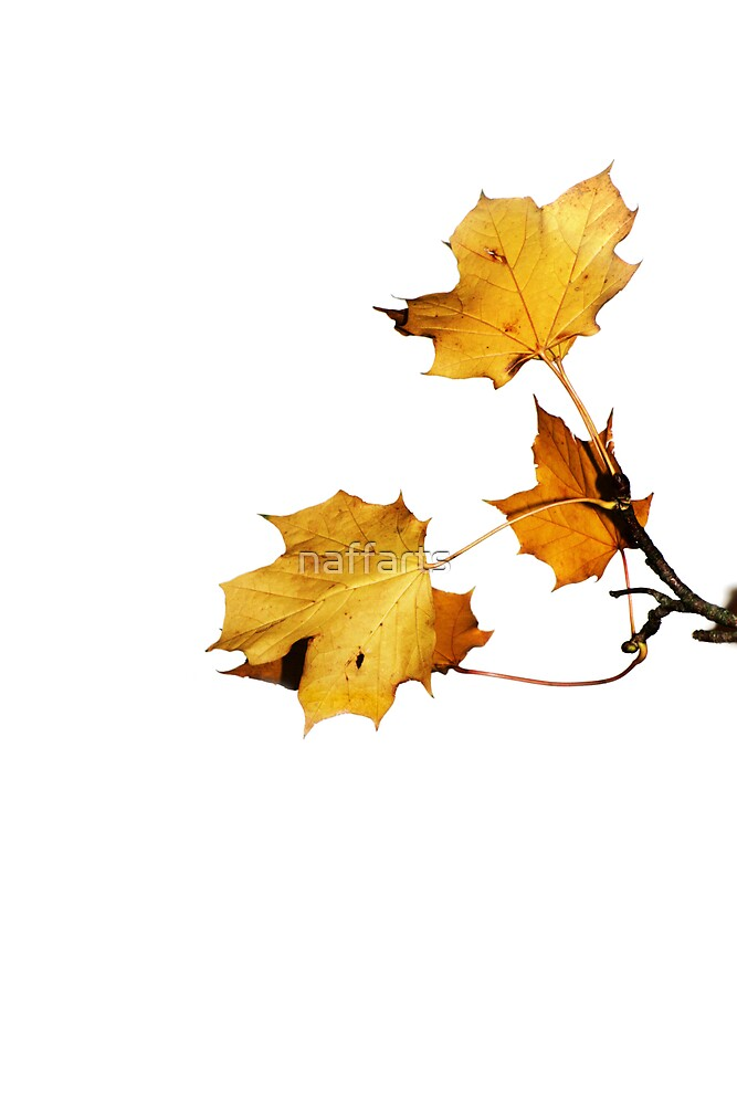 Last Golden Autum leaves by naffarts