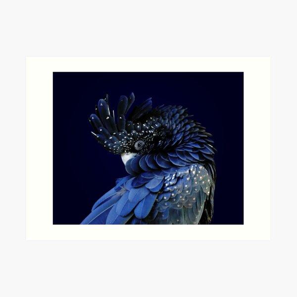 Fibonacci Cockatoo Art Print