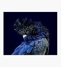 Fibonacci Cockatoo Photographic Print