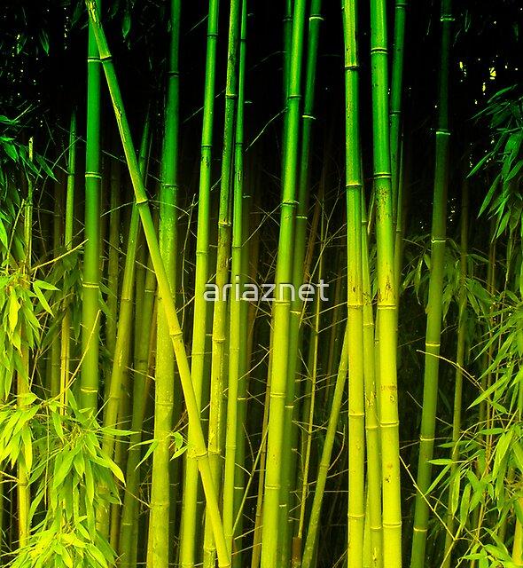Green world by ariaznet
