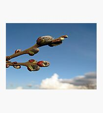 Willow Clouds Photographic Print