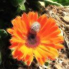 Stripes on Orange in Fractalius by Rosalie M