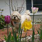 Happy summer day for puppy! by Christine Frydenborg Dargon