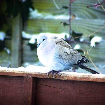 Gentle dove by missmoneypenny
