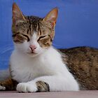 Greek Tabby and White Cat by emele