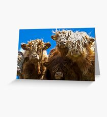 Friendly curious highland cattle Greeting Card