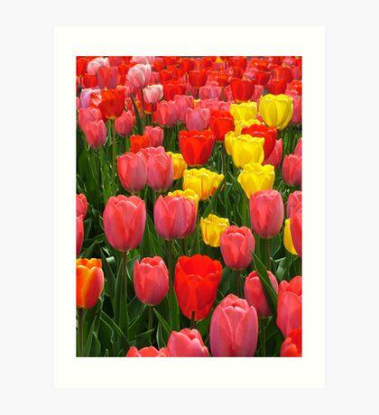 Tulips, Howell Michigan Art Print
