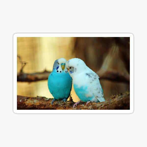 Lovely Pair Of Budgies Sticker