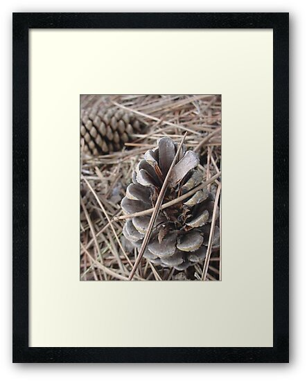 Pine Cones by sternbergimages