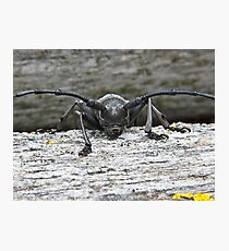 Longhorn Beetle Photographic Print