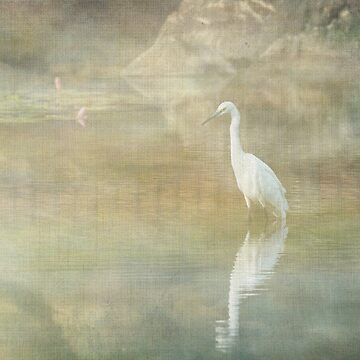 Reflecting Egret by tillymagoo