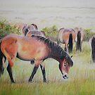 Exmoor Ponies on Drumbrough Moss by Sheila Fielder