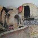Greedy Pig by Sheila Fielder
