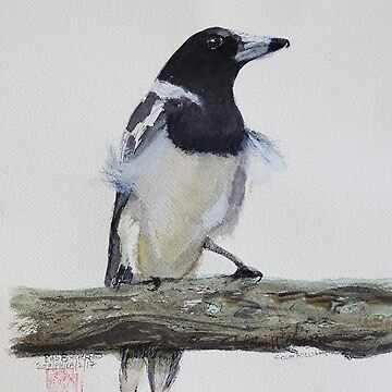 AustralianPied Butcherbird by ColinWilliams