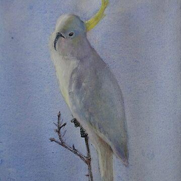 Sulphur-crested Cockatoo - Australian icon. by ColinWilliams