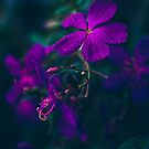 Purple Raindrops by yolanda