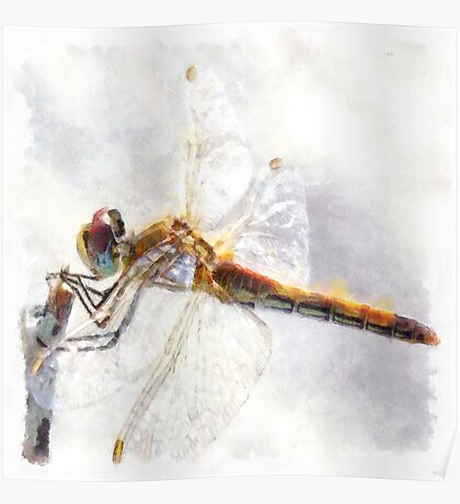 Platinum White Dragonfly Watercolor Poster