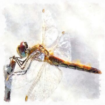 Platinum White Dragonfly Watercolor by taiche