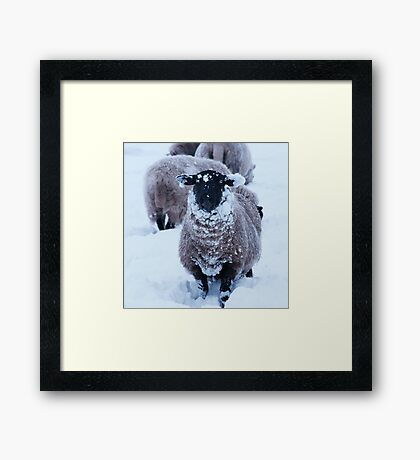 Where's my wooly hat Framed Print