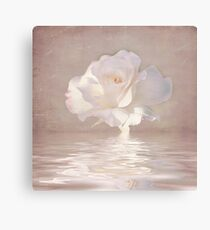 Pastel Pink Rose Canvas Print