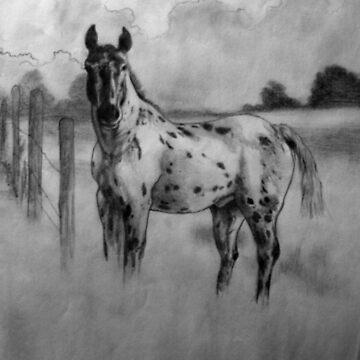Horse by ciriva