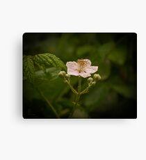 Wild Blackberry Canvas Print