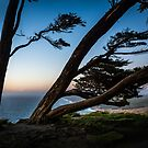 Point Reyes Coastal Trees by EthanQuin
