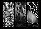 Circles Triptych by Martina Fagan