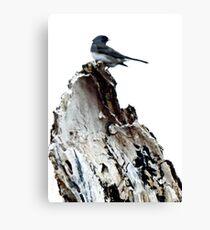 One Little Bird Canvas Print