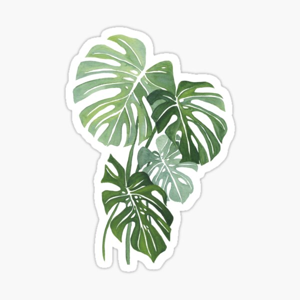 Monstera Leaves Sticker