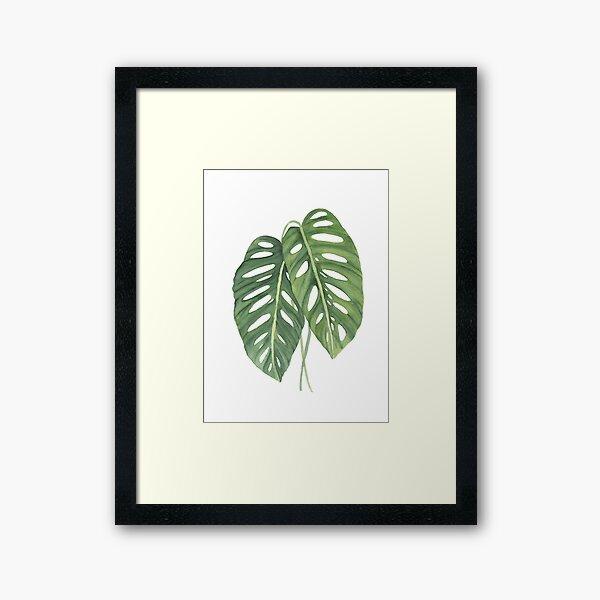 Monstera Leaves 3 Framed Art Print