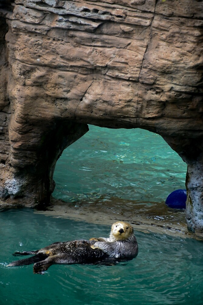 Sea Otter by tstarch