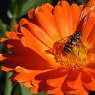 The  Bug by Alexander Mcrobbie-Munro
