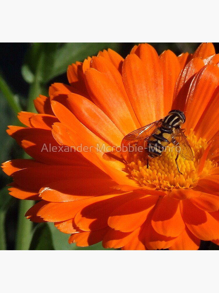 The  Bug by Alexanderargyll