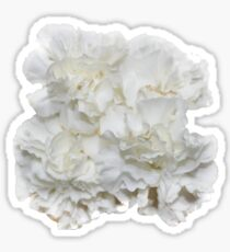 Bouquet of White Carnations Flowers - Hipster/Pretty/Trendy Flowers Sticker