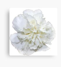 Single White Carnation - Hipster/Pretty/Trendy Flowers Canvas Print
