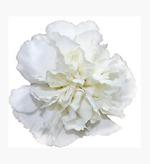 Single White Carnation - Hipster/Pretty/Trendy Flowers Photographic Print