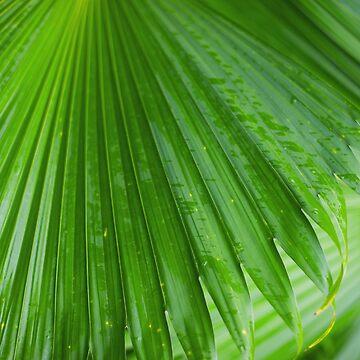Tropics by runlenarun