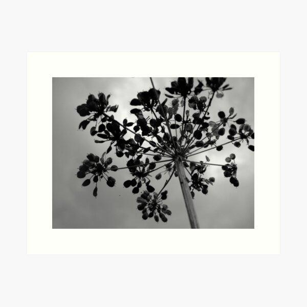 Seedhead  Art Print
