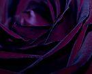 Purple Velvet by Ingrid Beddoes