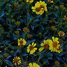 Desert Flowers by HeavenOnEarth