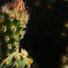 Cactus bloom by HeavenOnEarth