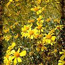 Yellow Desert Wild Flowers by HeavenOnEarth